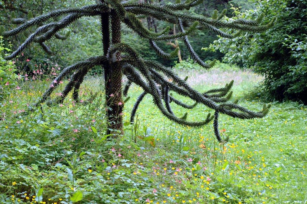 tropische pflanzen im garten – bankroute, Hause und garten